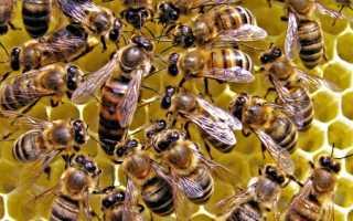 Как разводить пчёл?