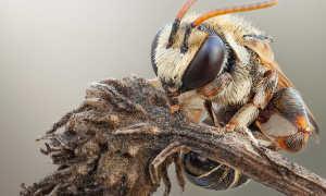 Всё про диких пчел