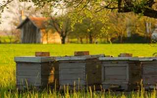 Правильный уход за пчелами весной