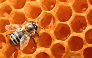 Пчелиные соты: польза, состав и как хранить мёд