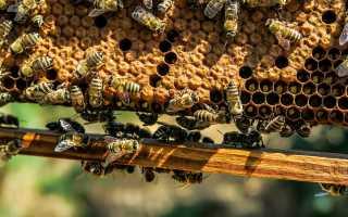 Как пчелы делают мед и зачем?