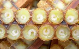 Польза личинок пчел для здоровья