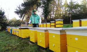 Цены на покупку семьи пчел