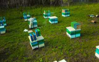 Промышленное пчеловодство: особенности