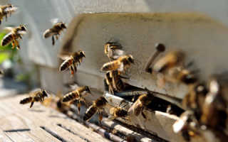 Проводим весеннею ревизию пчел