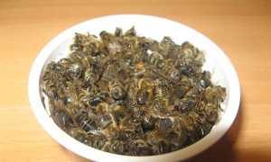Подмор пчелиный: всё что нужно знать о нём