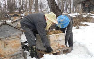 Когда выносить пчел из зимовника?