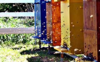 Двухматочное содержание пчел: методы и особенности