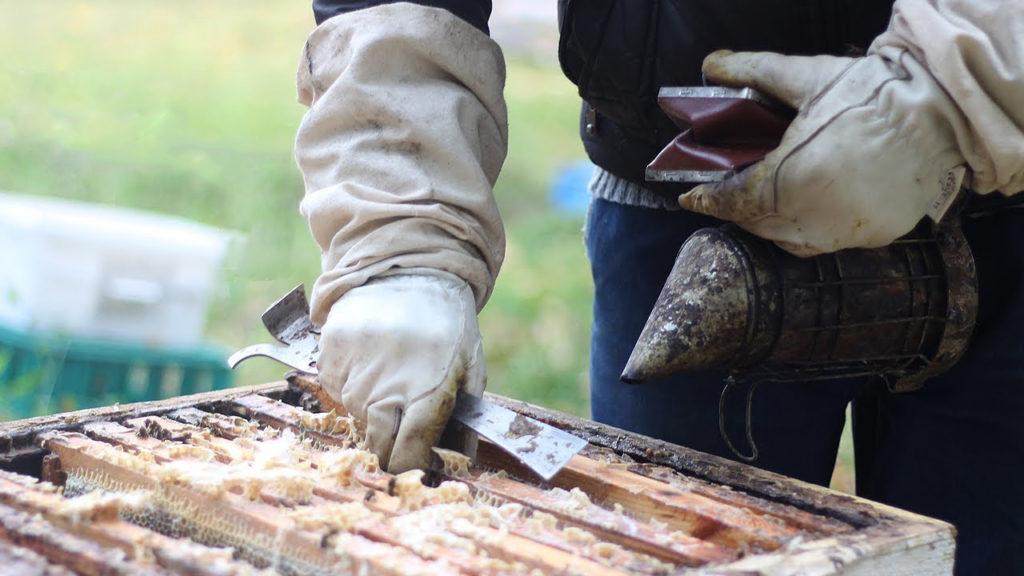 Наиболее эффективный метод обработки ульев – распыление лечебных препаратов