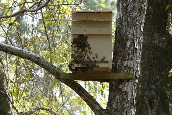 Ловушка для пчёл размещение