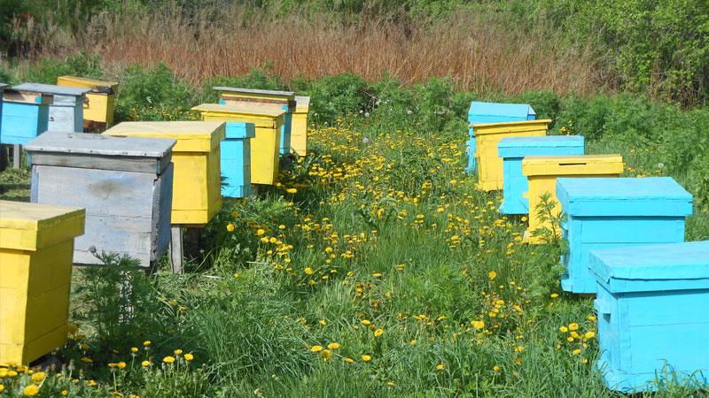 Пчеловодство для начинающих, с чего начать ?