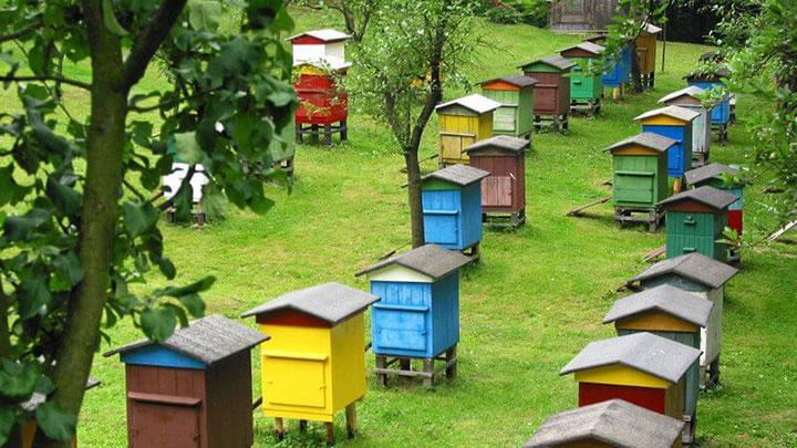 Разведение пчел на пасеке в домашних условиях