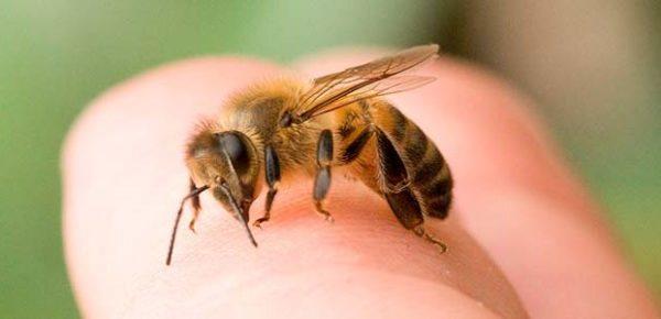 кусает пчела