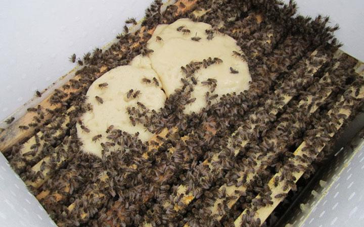 Пчелы очень любят канди