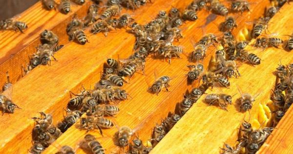 Нужно правильно подбирать пчел