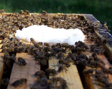 едят пчелы