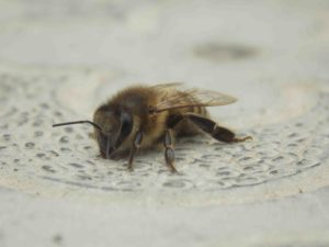 Способы и советы, как правильно утеплить улей пчёлам для зимовки на улице