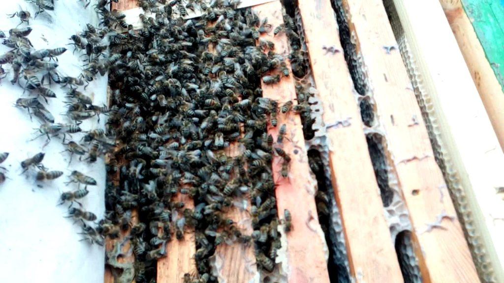Пчелы зимой