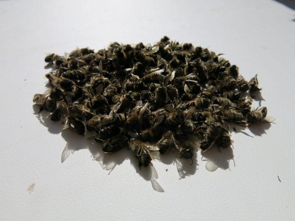 Подмор - это как раз и есть мертвые насекомые, собрав которые можно сделать на их основе настойку с применением спирта или водки