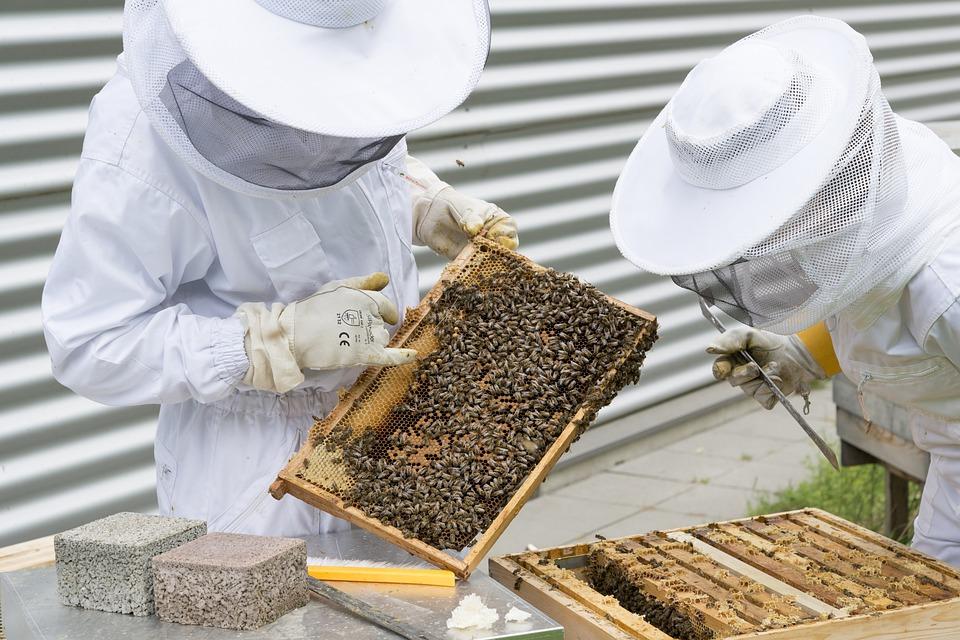 опытные пчеловоды