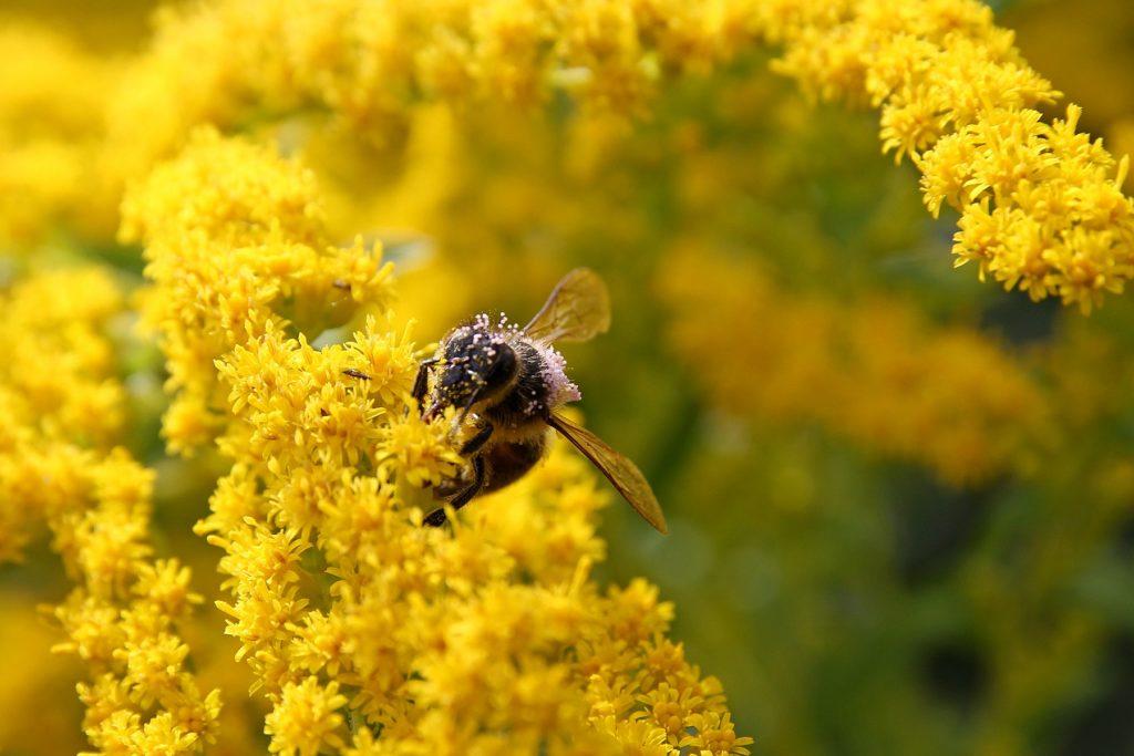пчела за цветком