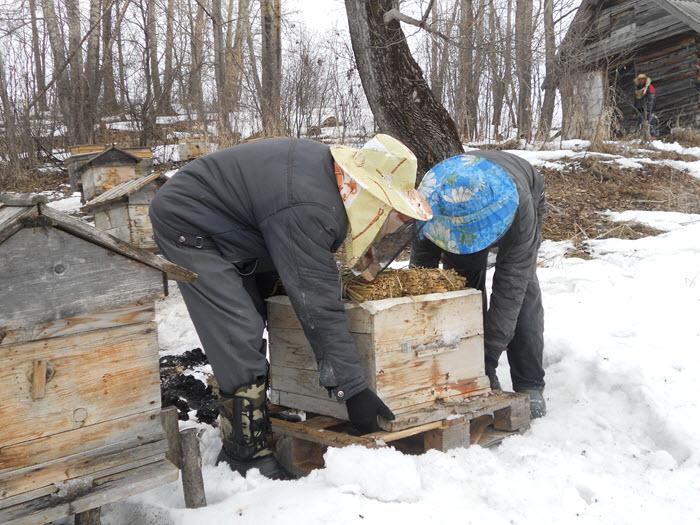 Вынос пчел из зимовника