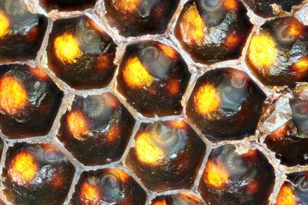 Сахарный сироп для пчел на зиму: инвертированный и обычный, лечебные добавки