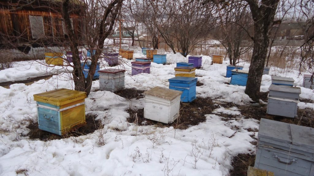 Весенние работы на пасеке: после зимовки в марте, апреле, мае
