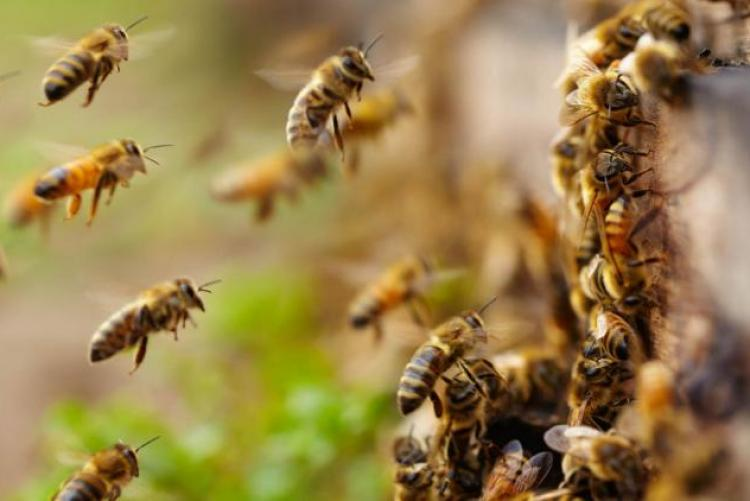 Пчелы в ульях как подсчитать количество пчел