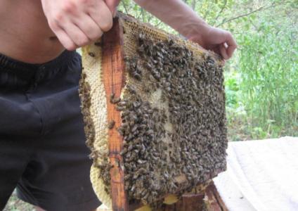 Как сделать отводки пчел весной