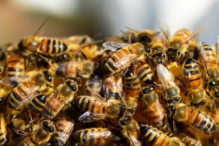 Роение пчел и меры его предупреждения