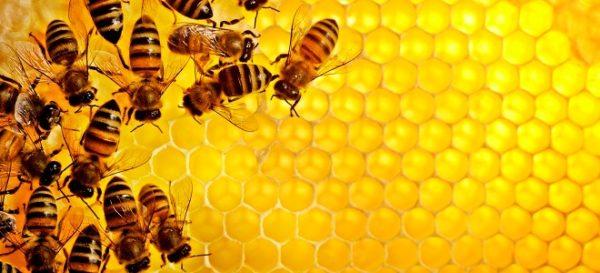 Можно ли проглатывать воск из пчелиных сот