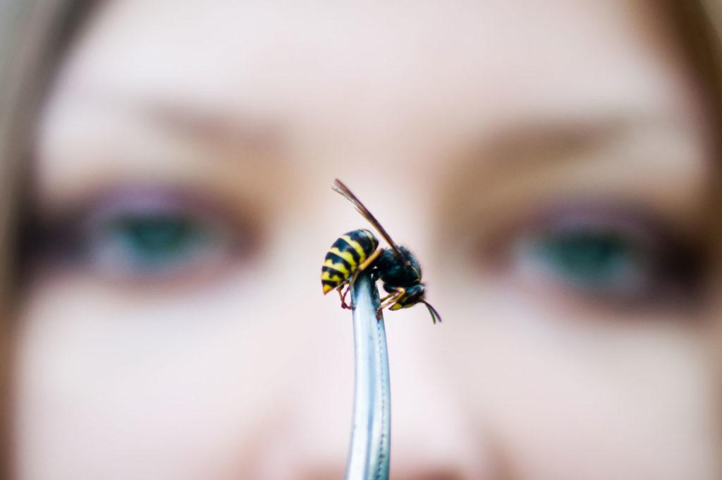 Какие растения не любят пчелы
