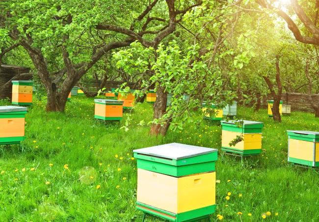 Пчеловодство как бизнес: бизнес-план по разведению пчел, с чего начать, как преуспеть, пример