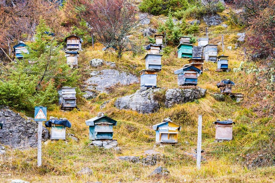 Аренда пасеки советы пчеловоду
