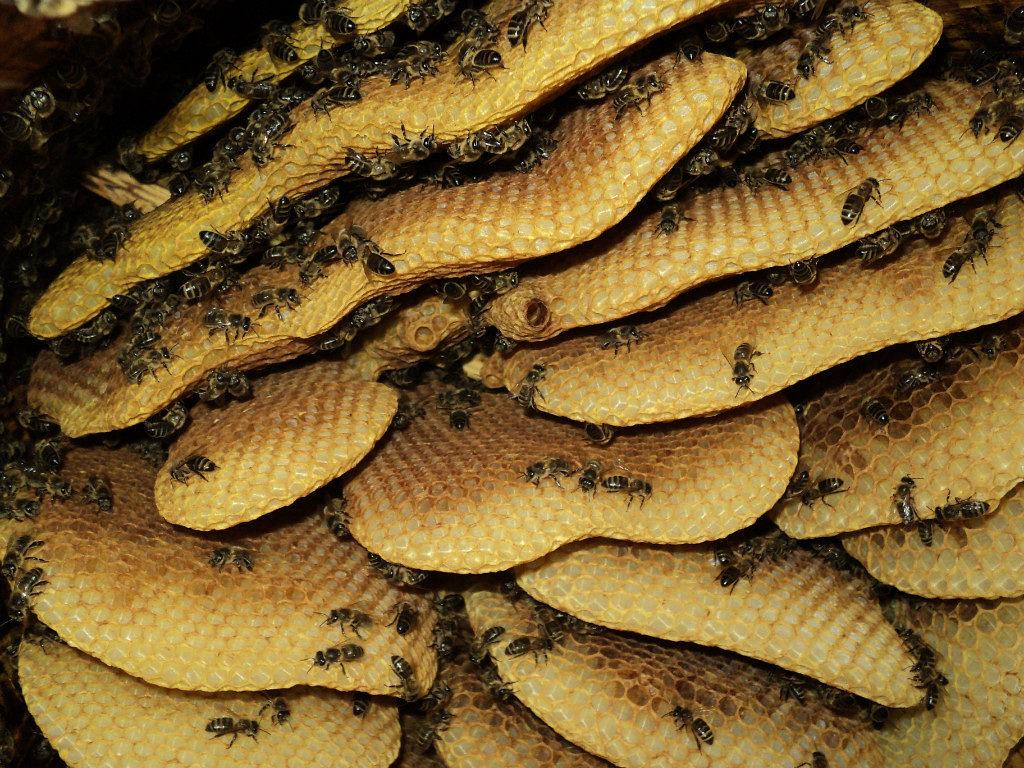 Башкирский дикий мед польза и вред